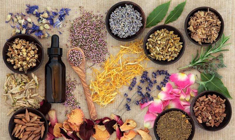 Những cây thuốc, vị thuốc có tác dụng thay thế mật gấu