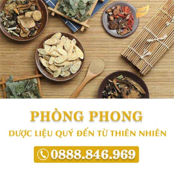 PHÒNG PHONG - DƯỢC LIỆU QUÝ ĐẾN TỪ THIÊN NHIÊN
